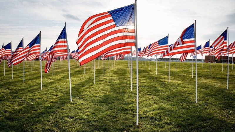 several-american-flags-on-a-grassy-field-A5EDBZA